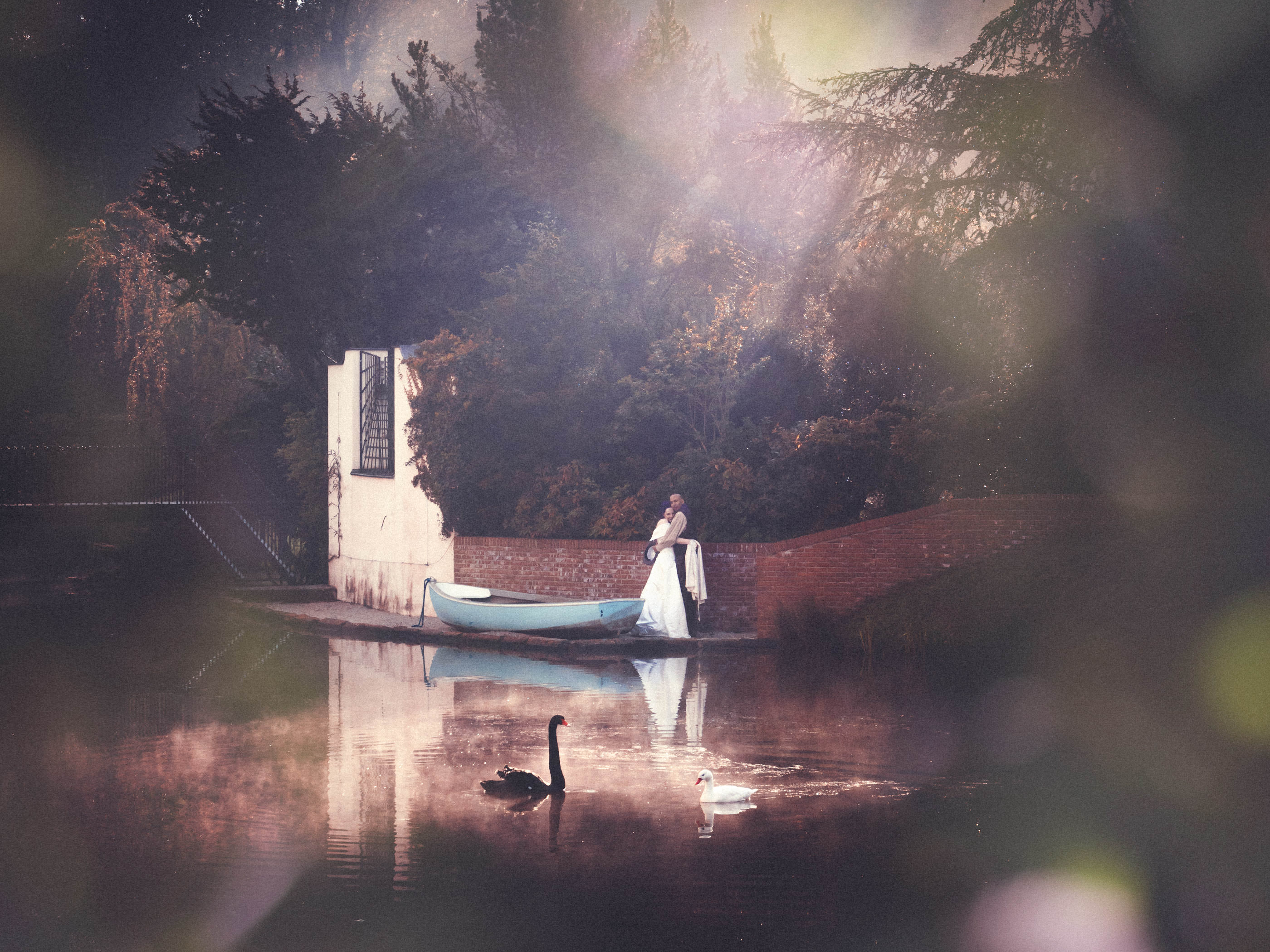 Weddingphoto at dawn, couple with swans in morninglight